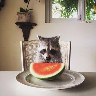 Raccoon-Rescued-10