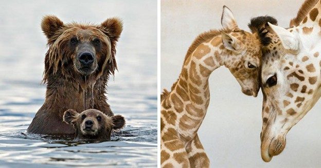 papa-maman-animaux