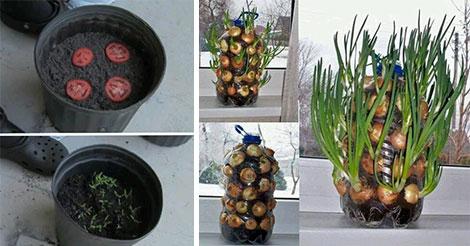faire-pousser-plantes-facilement