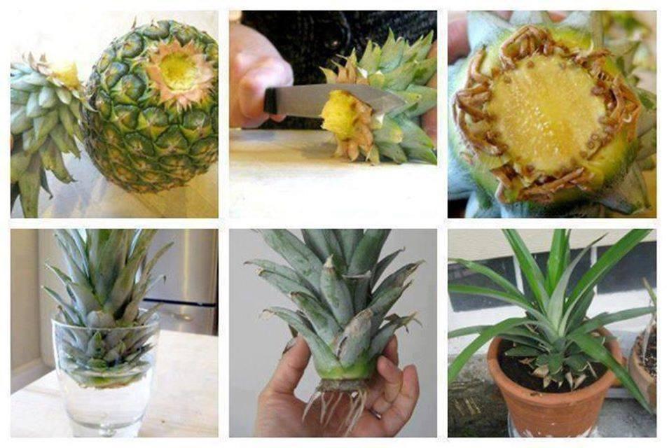 comment faire pousser facilement des plantes chez soi actu maroc. Black Bedroom Furniture Sets. Home Design Ideas