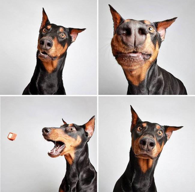 chien-photomaton-1