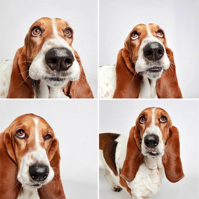 chien-photomaton-11