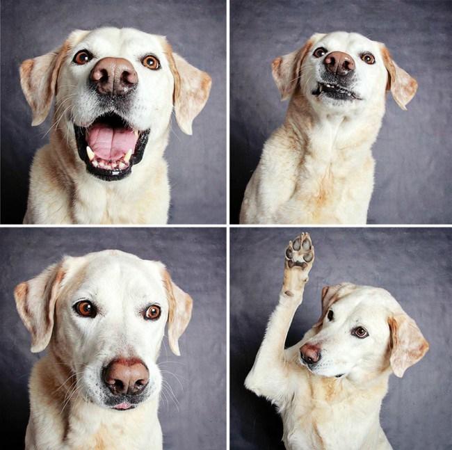 chien-photomaton-5