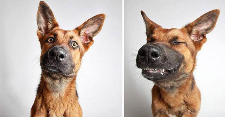 photomaton-chien-abandonne