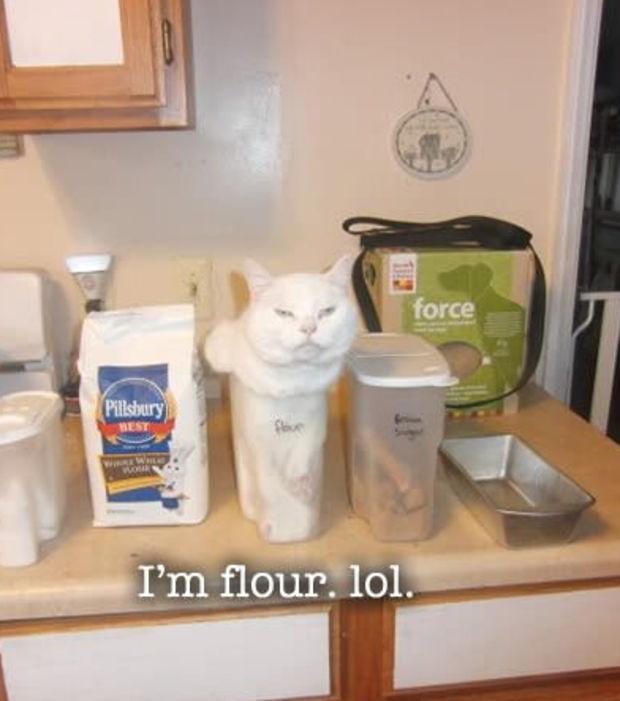 chat pas logique 10