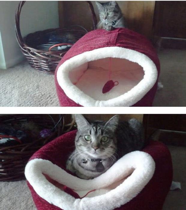 chat pas logique 12
