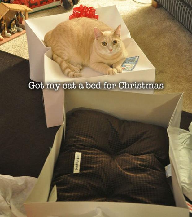 chat pas logique 9