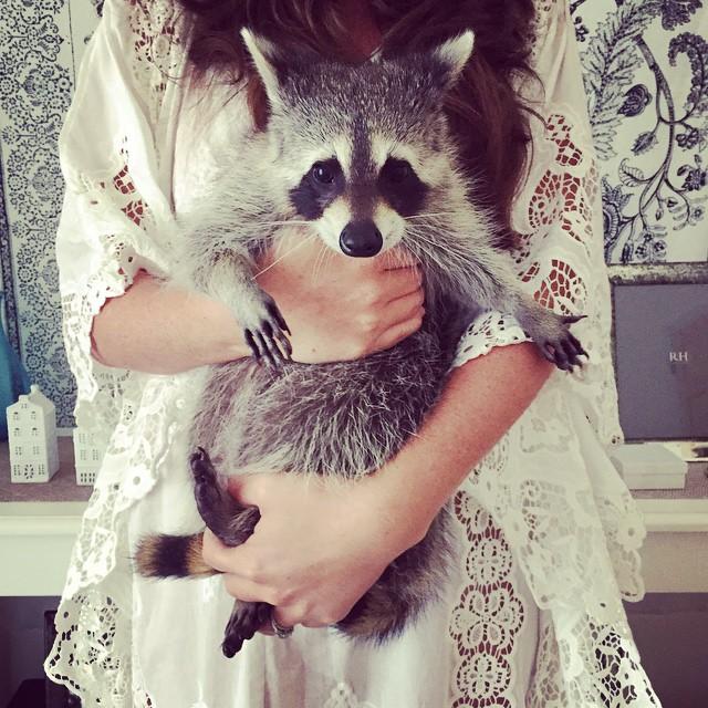 Raccoon-Rescued-20
