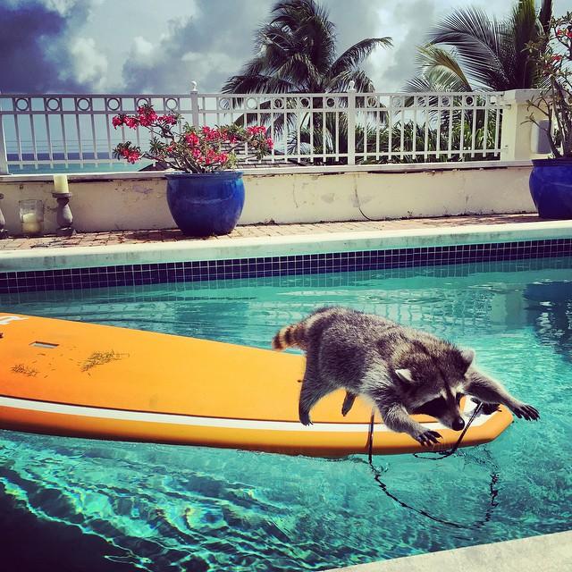 Raccoon-Rescued-6