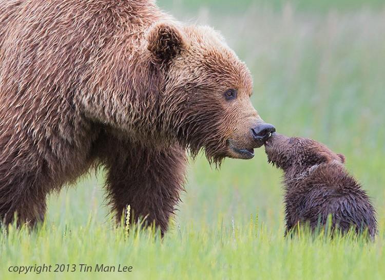 animal-parent-13