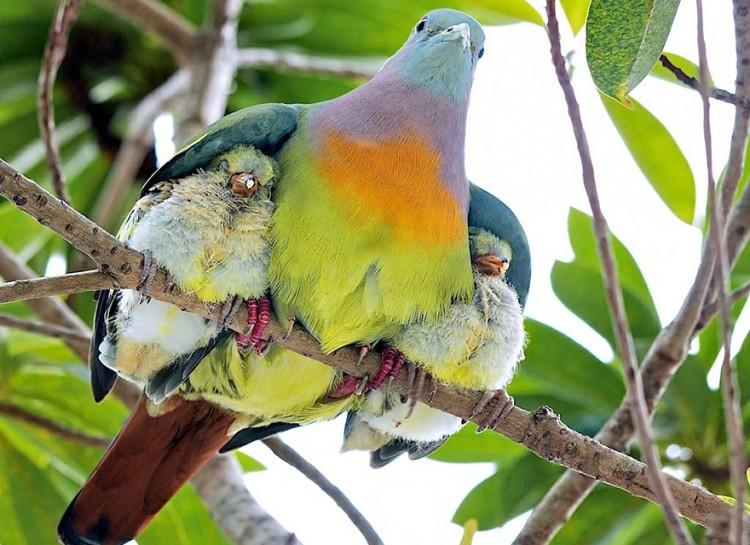 animal-parent-2