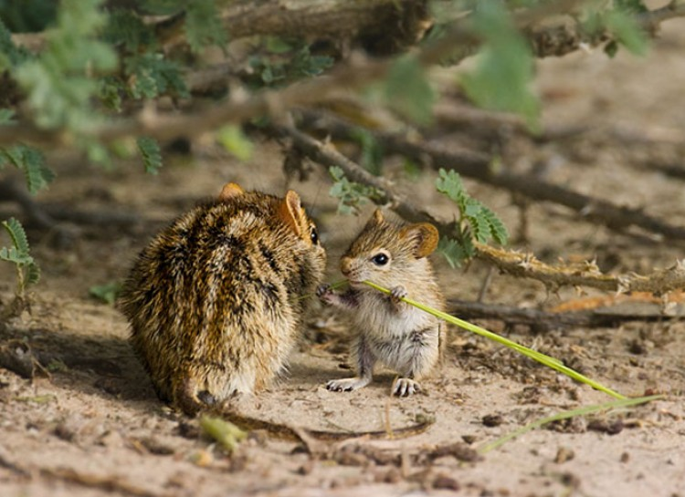 animal-parent-21