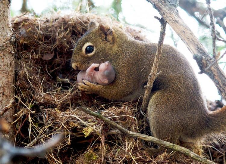 animal-parent-8