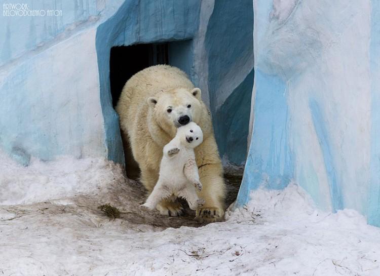 animal-parent-9