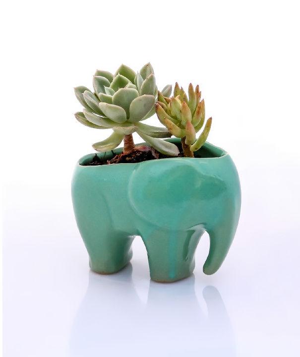 article-elephant-6