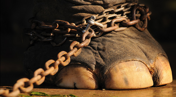 cirque-interdit-animaux-1