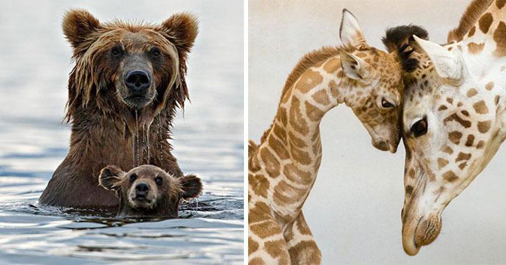 maman-papa-animaux