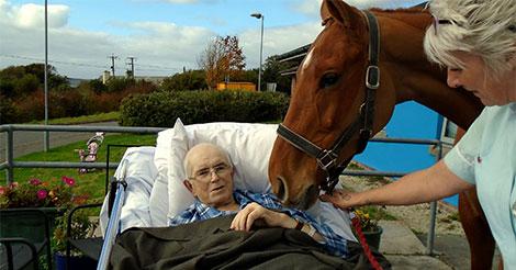 mourant-dernier-souhait-cheval
