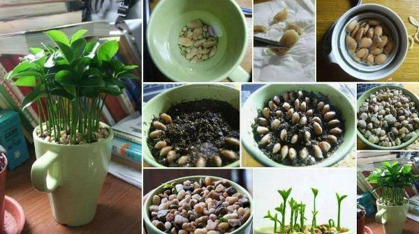 legume-plante-11
