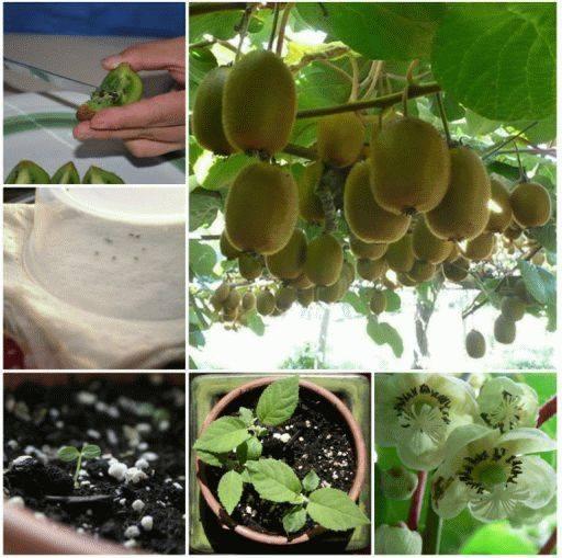 legume-plante-12