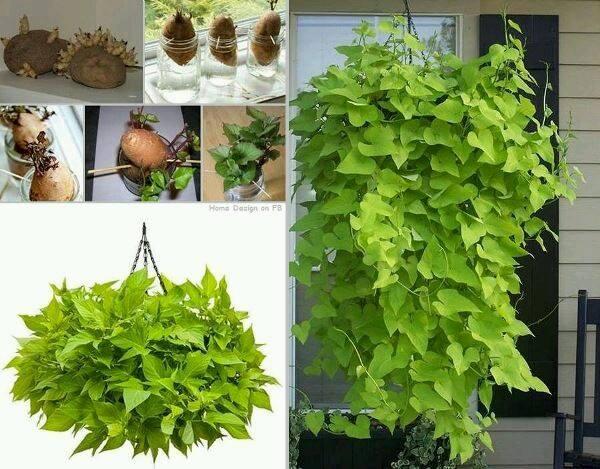 legume-plante-13