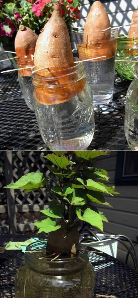 legume-plante-14