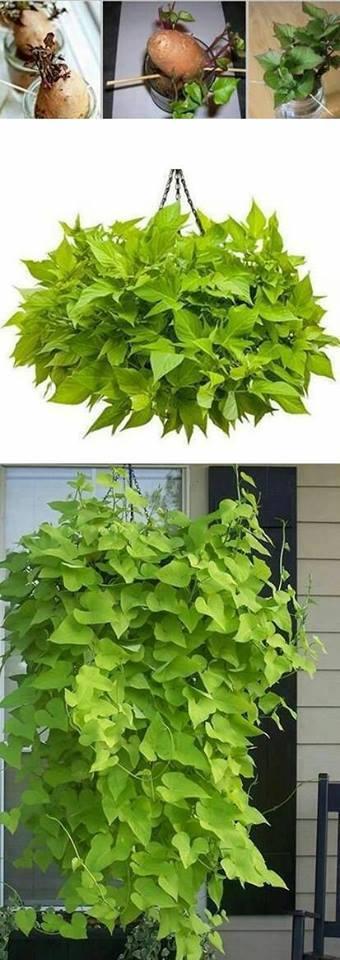 legume-plante-16