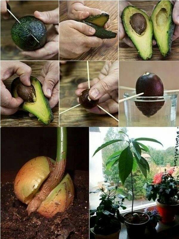 legume-plante-2