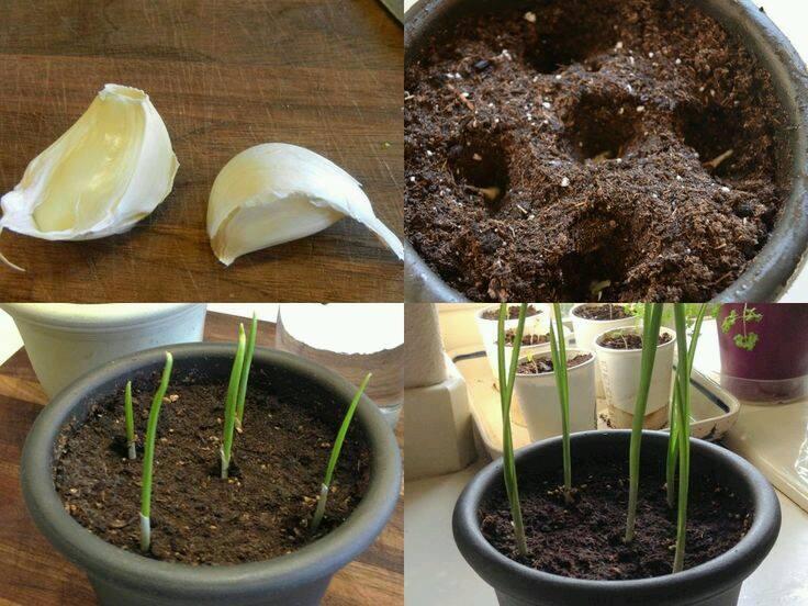 Comment faire pousser facilement des plantes chez soi - Comment faire pousser des tomates ...