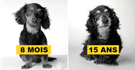 chien-age-0