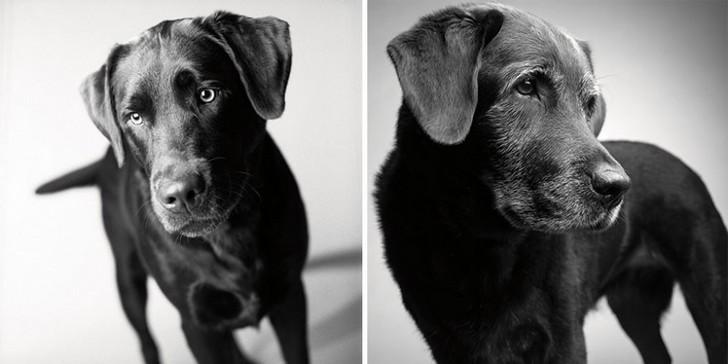 chien-age-1