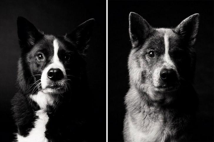 chien-age-10
