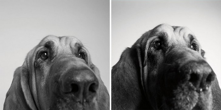 chien-age-5