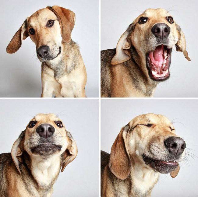 chien-photomaton-7