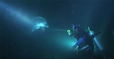 plongeur-sauve-dauphin-blesse