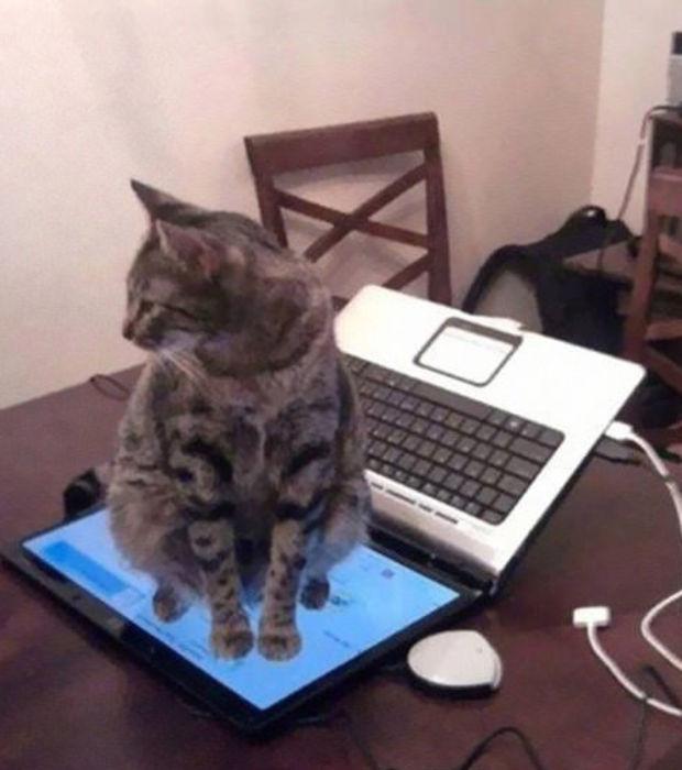 chat pas logique 13