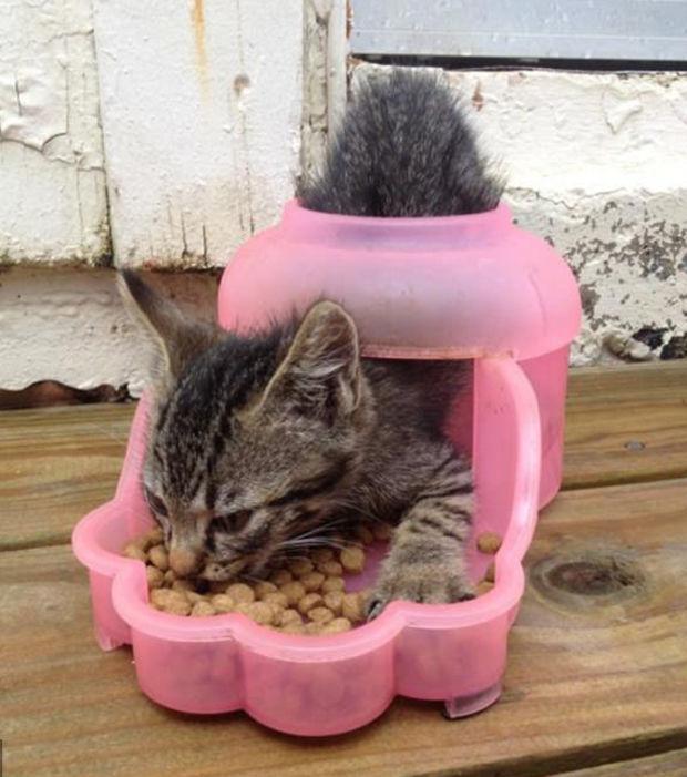 chat pas logique 8