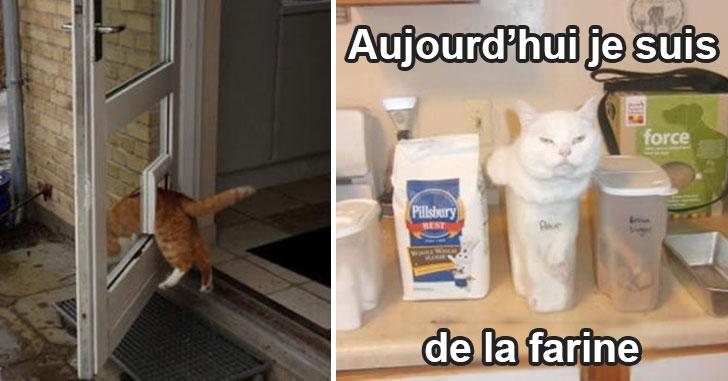 chat-pas-logique